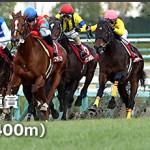 2014年阪神Cの注目馬