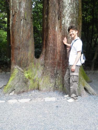 伊勢神宮外宮の夫婦の木