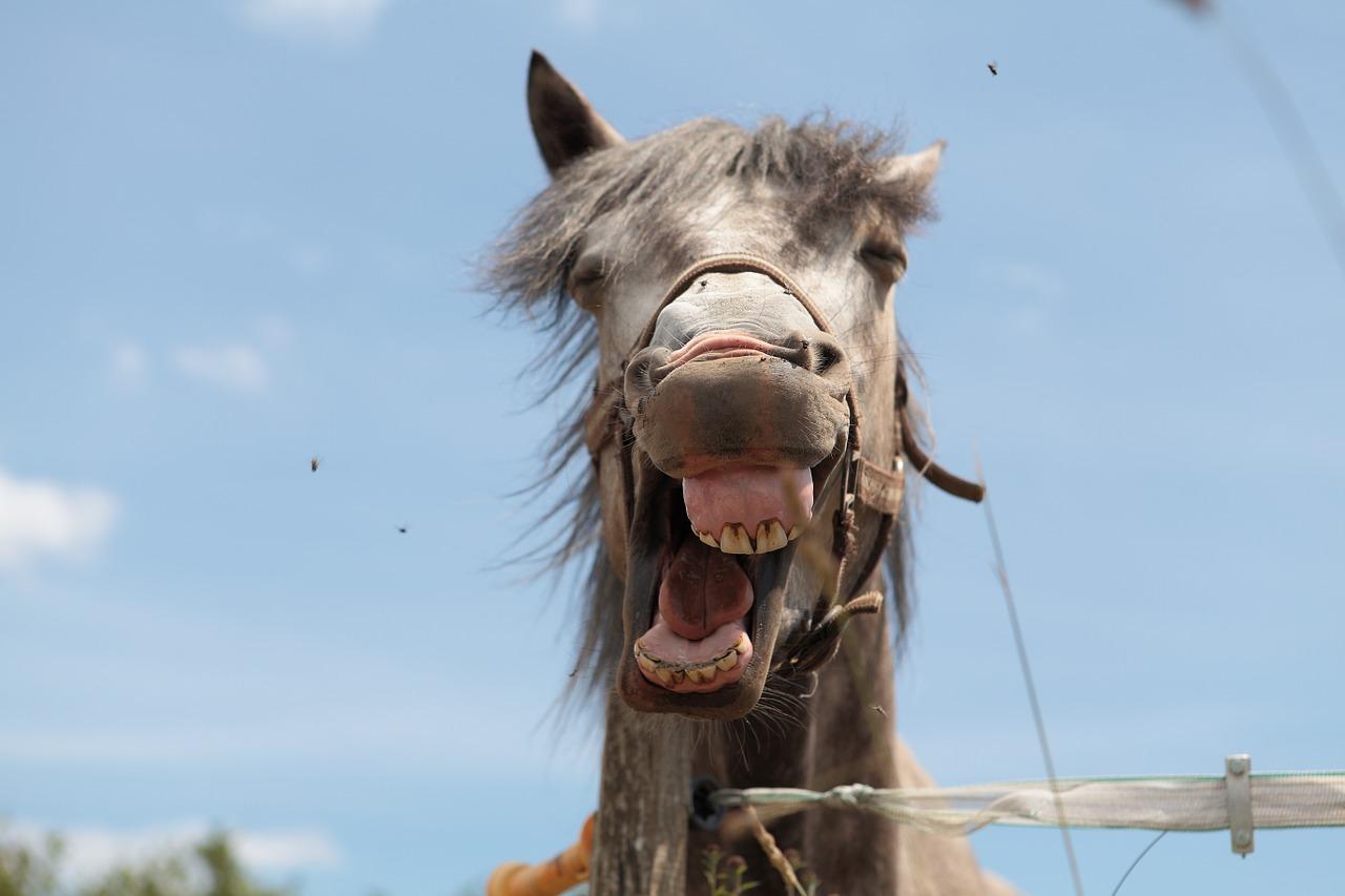 先週の馬場傾向(7月4日,5日)と、今週の馬場予想(7月11日,12日)と、「今」が大事!