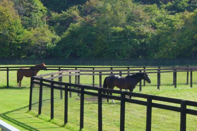 前の馬はアドマイヤベガ