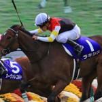 エリザベス女王杯の調教抜群の馬と、先週の馬場傾向(11月7日,8日)と、今週の馬場予想(11月14日,15日)