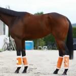 ジャパンC2015予想に ショウナンパンドラの近走評価と馬の特徴