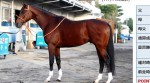 マイルチャンピオンシップ2015予想に モーリスの近走評価と馬の特徴