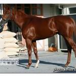 エアスピネルの近走評価と馬の特徴~朝日杯フューチュリティS2015予想に