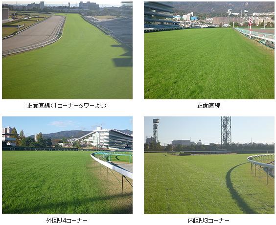 5回阪神芝コースの様子