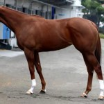 メジャーエンブレムの近走評価と馬の特徴~阪神ジュベナイルフィリーズ2015予想に