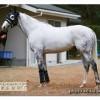 ゴールドシップの近走評価と馬の特徴~有馬記念2015予想に