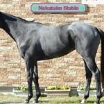 ブランボヌールの近走評価と馬の特徴~阪神ジュベナイルフィリーズ2015予想に