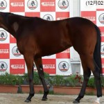 キャンディバローズの近走評価と馬の特徴~阪神ジュベナイルフィリーズ2015予想に