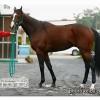 リアファルの近走評価と馬の特徴~有馬記念2015予想に