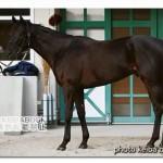 リオンディーズの近走評価と馬の特徴~朝日杯フューチュリティS2015予想に