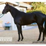 イモータルの近走評価と馬の特徴~朝日杯フューチュリティS2015予想に