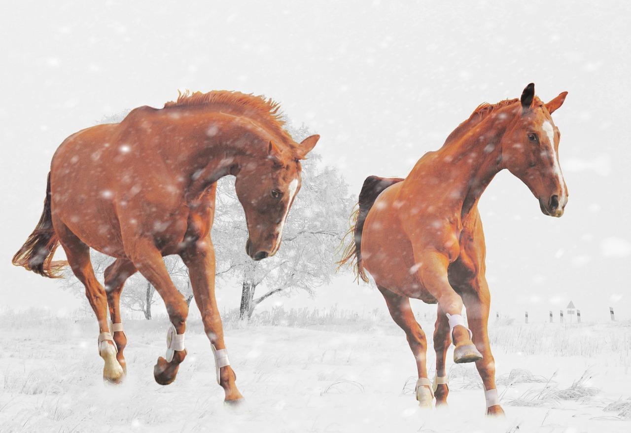 あの有望な3歳馬たちについてと、先週の馬場傾向(1月23日,24日)と、今週の馬場予想(1月30日,31日)