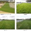 京成杯のクラシック番付けトップの馬と、先週の馬場傾向(1月9日,10日,11日)と、今週の馬場予想(1月16日,17日)