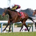 日経新春杯2016のレース回顧と次走以降の注目馬と、名馬発見?と、現時点でのリーディングジョッキー