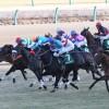 【予想追記】京成杯2016予想:出走馬の前走チェックコメントと「勝ちポジ」予想