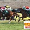 京都金杯2016予想に:出走馬の前走チェックコメント