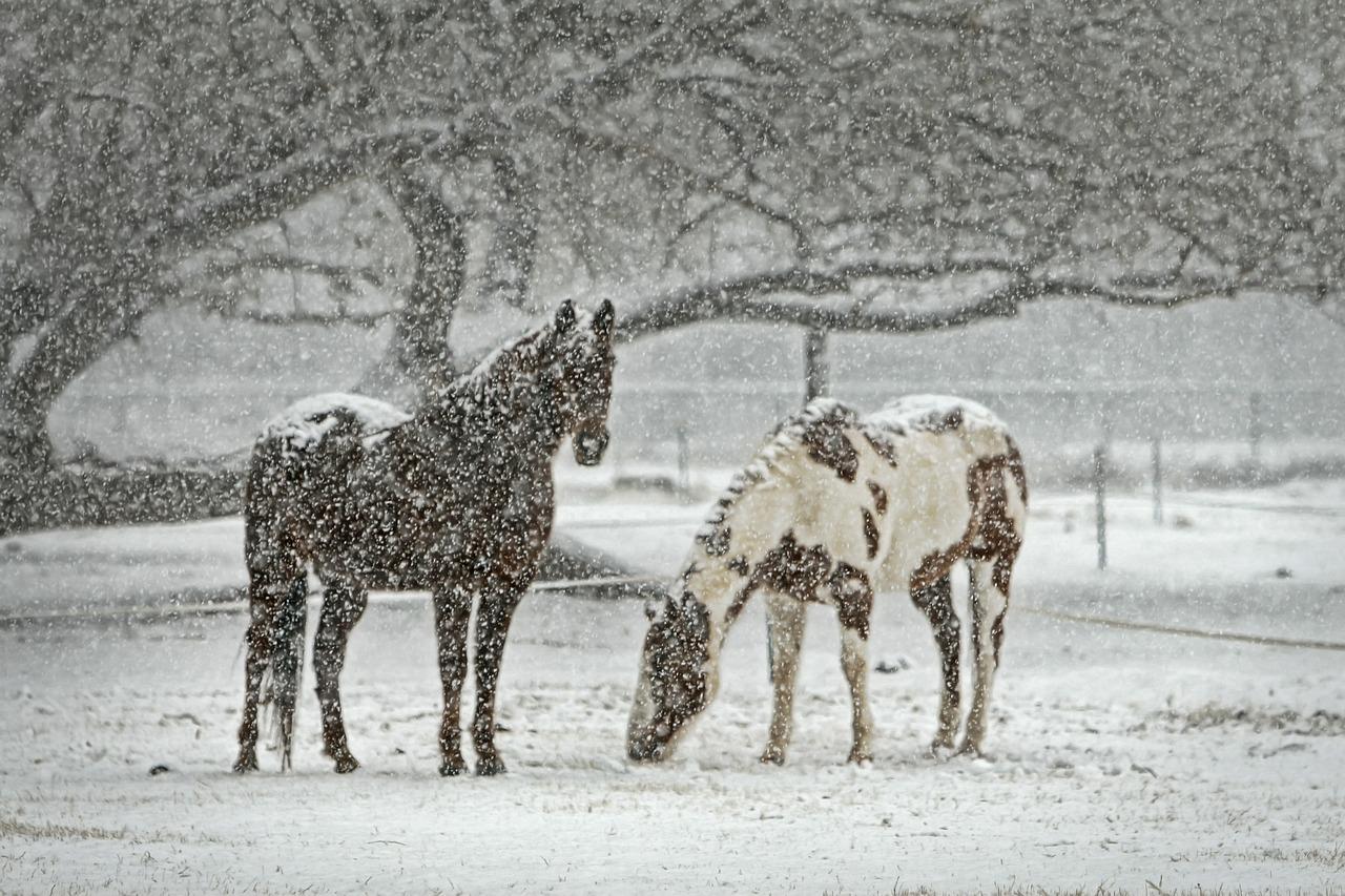 クラシックに向けて大注目のきさらぎ賞と、先週の馬場傾向(1月30日,31日)と、今週の馬場予想(2月6日,7日)