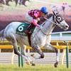 東京新聞杯2016のレース回顧と次走以降の注目馬と、東京マイルベストの安田記念期待馬など
