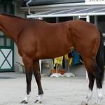 ビッグアーサーの近走評価と馬の特徴~高松宮記念2016予想に
