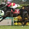 日経賞2016のレース回顧と次走以降の注目馬と、レベルの高いレース発見!