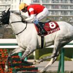 【予想追記】阪神大賞典2016予想:出走馬の前走チェックコメントと「勝ちポジ」予想
