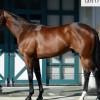 ミッキーアイルの近走評価と馬の特徴~高松宮記念2016予想に