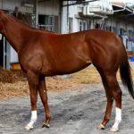 メジャーエンブレムの近走評価と馬の特徴~NHKマイルC2016予想に