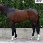 サトノアラジンの近走評価と馬の特徴~安田記念2016予想に