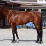 マカヒキの近走評価と馬の特徴~日本ダービー2016予想に