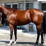 ディーマジェスティの近走評価と馬の特徴~日本ダービー2016予想に