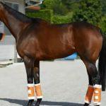 ショウナンパンドラの近走評価と馬の特徴~ヴィクトリアマイル2016予想に