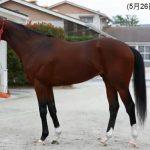 リアルスティールの近走評価と馬の特徴~安田記念2016予想に