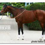 モーリスの近走評価と馬の特徴~安田記念2016予想に