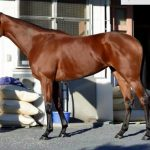エリザベス女王杯2016予想に タッチングスピーチの近走評価と馬の特徴