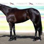 エリザベス女王杯2016予想に マリアライトの近走評価と馬の特徴