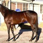 マイルチャンピオンシップ2016予想に ヤングマンパワーの近走評価と馬の特徴