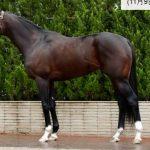 マイルチャンピオンシップ2016予想に サトノアラジンの近走評価と馬の特徴