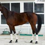 阪神ジュベナイルフィリーズ2016予想に ジューヌエコールの近走評価と馬の特徴