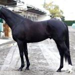 有馬記念2016予想に ゴールドアクターの近走評価と馬の特徴