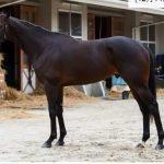 有馬記念2016予想に キタサンブラックの近走評価と馬の特徴
