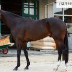 有馬記念2016予想に サウンズオブアースの近走評価と馬の特徴