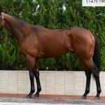 有馬記念2016予想に サトノダイヤモンドの近走評価と馬の特徴