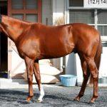 有馬記念2016予想に シュヴァルグランの近走評価と馬の特徴