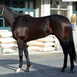 朝日杯フューチュリティS2016予想に ダンビュライトの近走評価と馬の特徴