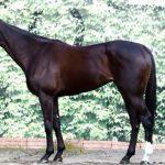 阪神ジュベナイルフィリーズ2016予想に ソウルスターリングの近走評価と馬の特徴