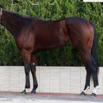 朝日杯フューチュリティS2016予想に ミスエルテの近走評価と馬の特徴