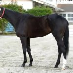 阪神ジュベナイルフィリーズ2016予想に リスグラシューの近走評価と馬の特徴