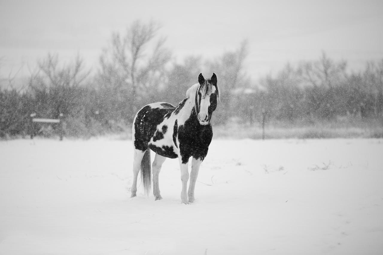 4日間開催はもう勘弁と、先週の馬場傾向(1月14~17日)と、今週の馬場予想(1月21,22日)