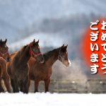 2017年中央競馬開幕!と、今週の馬場予想(1月5日,7日,8日)